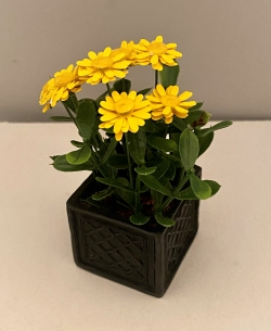 Yellow Zinnias in a Black Planter